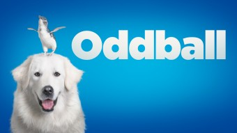 Oddball The Movie